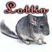 Lottin