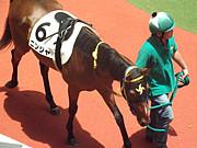 ニンジャ【競馬】