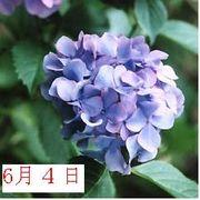 ☆昭和58年6月4日生まれ☆
