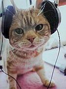 ♪猫も音ゲーも大好き♪