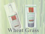 ウィートグラス・小麦草