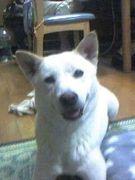 ★好きですっ日本犬Mix★