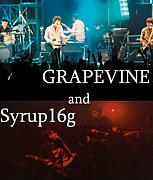 GRAPEVINE and Syrup16g