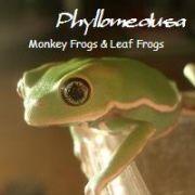 Love Phyllomedusa