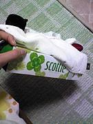 scottie☆clovers(緑)
