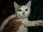 緊急!静岡の猫