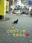 猫の曲線美が好き