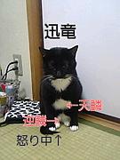 モンハン用(本部は上新庄)