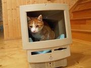 いつでもどこでも猫万歳!