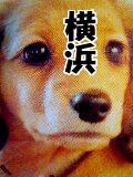Nintendogs 横浜支部
