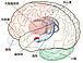 扁桃体〜大脳辺縁系に司る情動〜