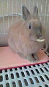 ☆ウサギ大好きin神奈川☆