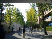 近大 お理工建築学科 銀杏の会