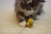 猫との出会いサイト