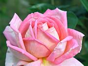 """British Brass """"La vie en rose"""""""
