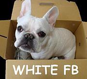 WHITE FB