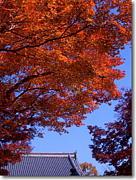 秋の空気が好き