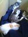 猫四匹の里親募集ギャラリー