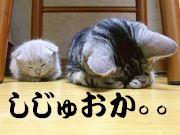 静岡県マイミク情報局!!