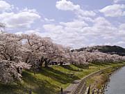 あの桜の下で逢いましょう