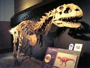 恐竜博2005