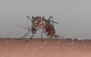 蚊をなんとかしませんか
