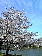 春だ!写真始めよう☆初心者歓迎