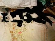 手袋ソックス猫ちゃん大好き