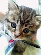 猫大好きだ!こんちきしょぅ☆