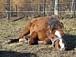 伴侶として馬を飼う田舎暮らし
