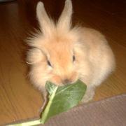 新米のウサギ飼い主さん