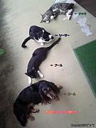 動物&ペットの掲示板(^ε^)