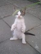 野良猫写真愛好会