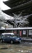 京都府産´゚д゚`)ラシーン人