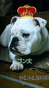 ソフトバンク【タダ友】広島の輪