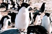 南極万歳!