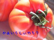 トマトかぁいらしぃやろ?