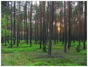 Forest Lounge @ ���