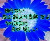 SOPHIA★向日葵の強さ★