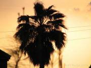 Mixi Mania de South California