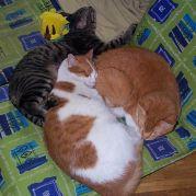 猫の集会所@mixi