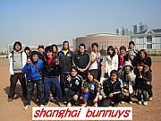 上海ソフト・シャンハイバニーズ