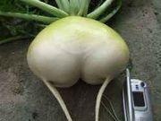 おふざけ野菜コンテスト