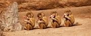 密かにフット猿