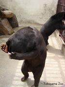☆悩める熊・ツヨシ☆
