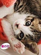 2月22日!猫の日生まれ