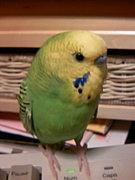 鳥のニオイが好き♪