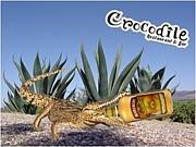 Crocodile クロコダイル