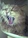 ◎●オカマさん家の猫●◎