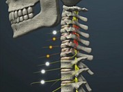 子供の骨格を考える